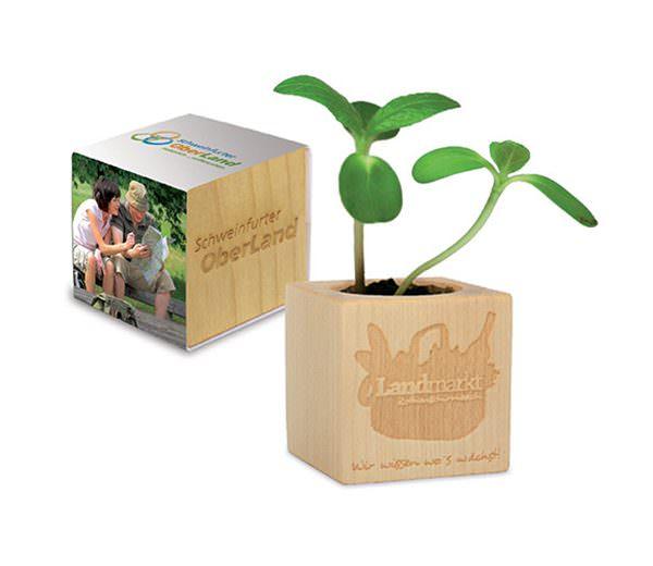 Pflanz Holz Würfel 3