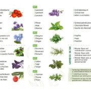Verfügbare Pflanzen 2